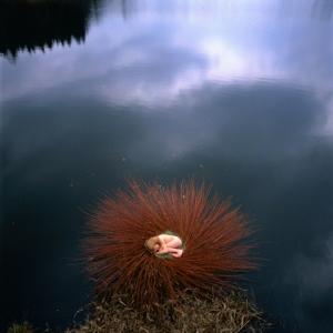 land art nils udo nid d'eau albi tarn